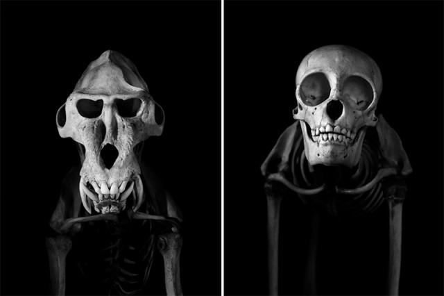 Exploration-of-Skeletons-by-Patrick-Gries1-640x426