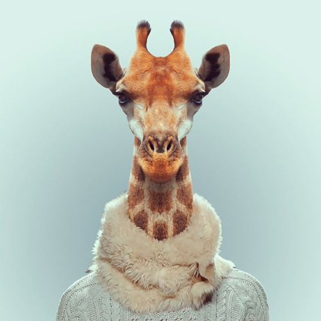 Fashion-Zoo-Animals7