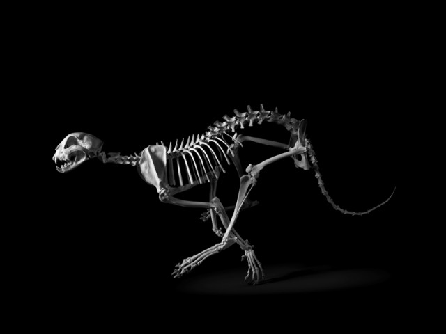 Exploration-of-Skeletons-by-Patrick-Gries8-640x480